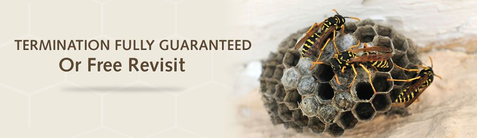 Guaranteed wasp services company in Middlesex